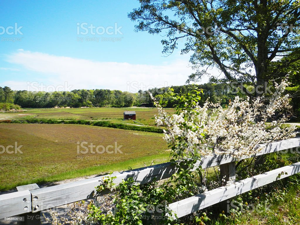 Cranberry bog on Cape Cod royalty-free stock photo