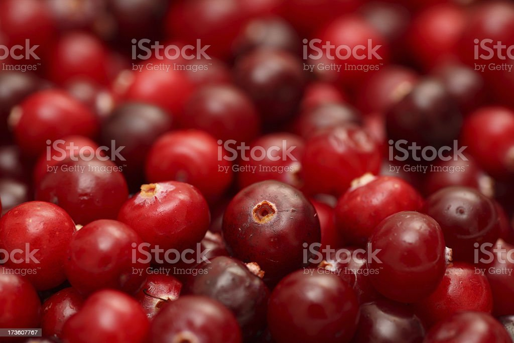Cranberry close-up royalty-free stock photo