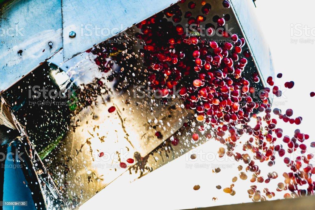 Machinerie de récolte de canneberges - Photo