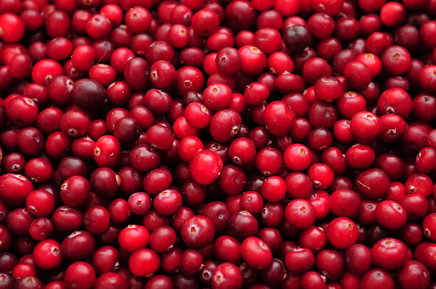 cranberry - cranberry stock photos and pictures