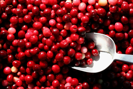 Cranberry Stock Photo - Download Image Now