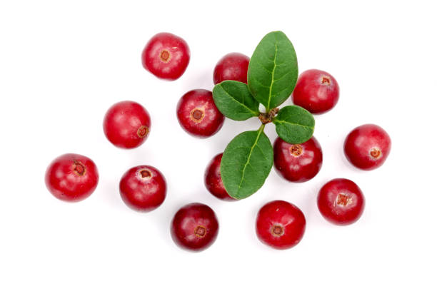 cranberry with leaf isolated on white background closeup top view - cranberry stock photos and pictures