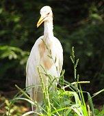 Close up photo of crane bird and best background.