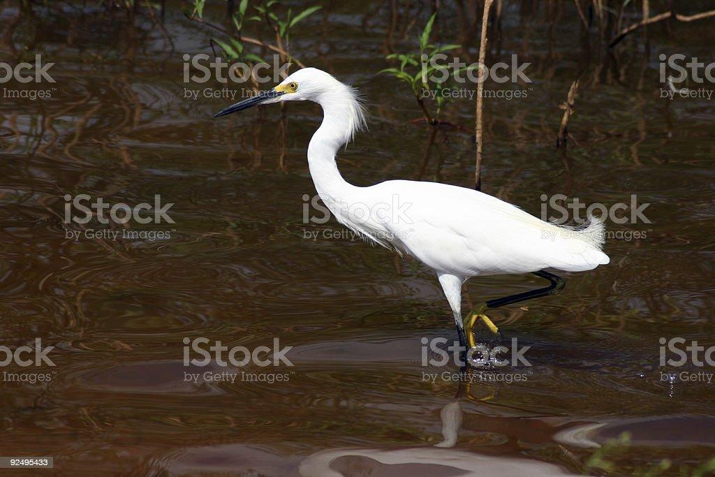 Crane Fishing royalty-free stock photo