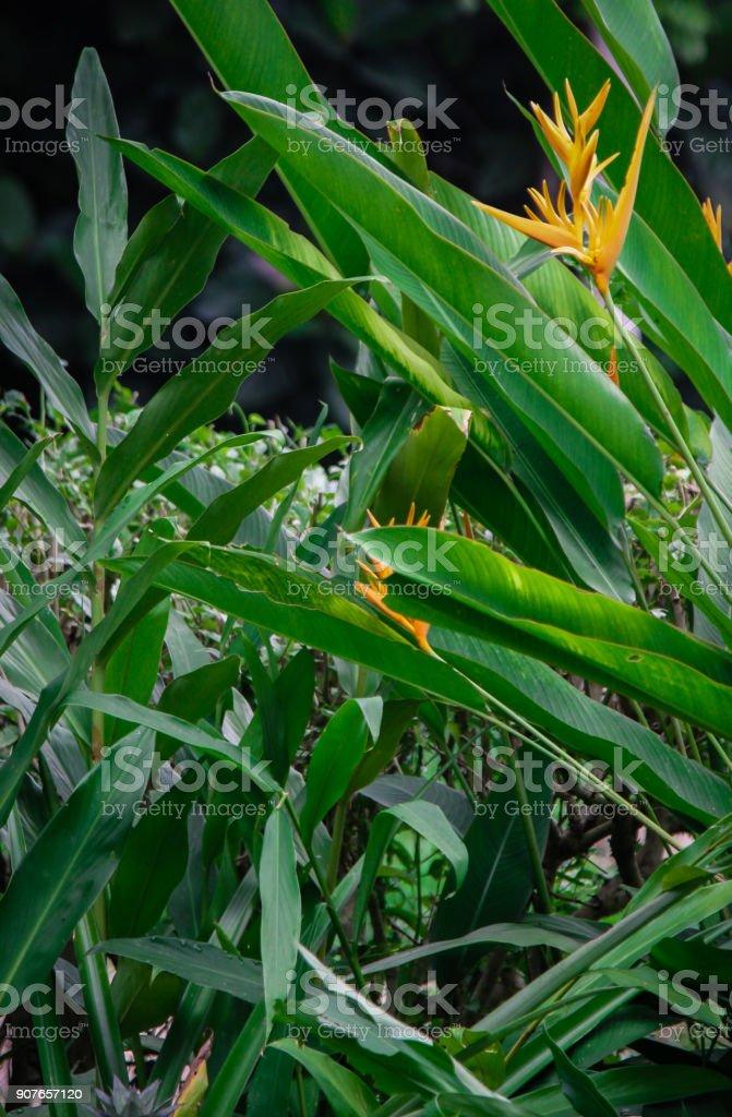 Crane flower in Bali stock photo