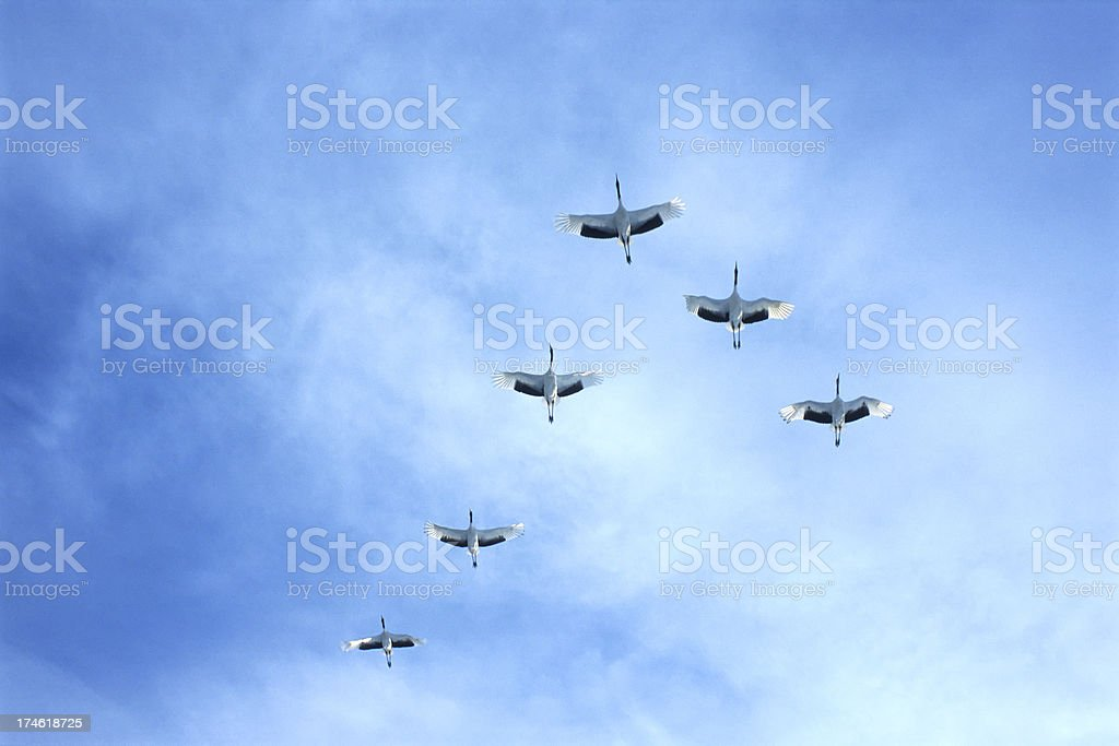 crane formation royalty-free stock photo