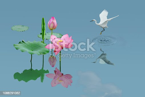 Crane lotus  decorative painting,a photographic work composed of white cranes and lotus flowers is like a fairyland on earth.
