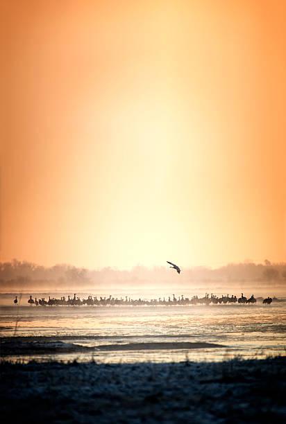 Crane Sunset stock photo