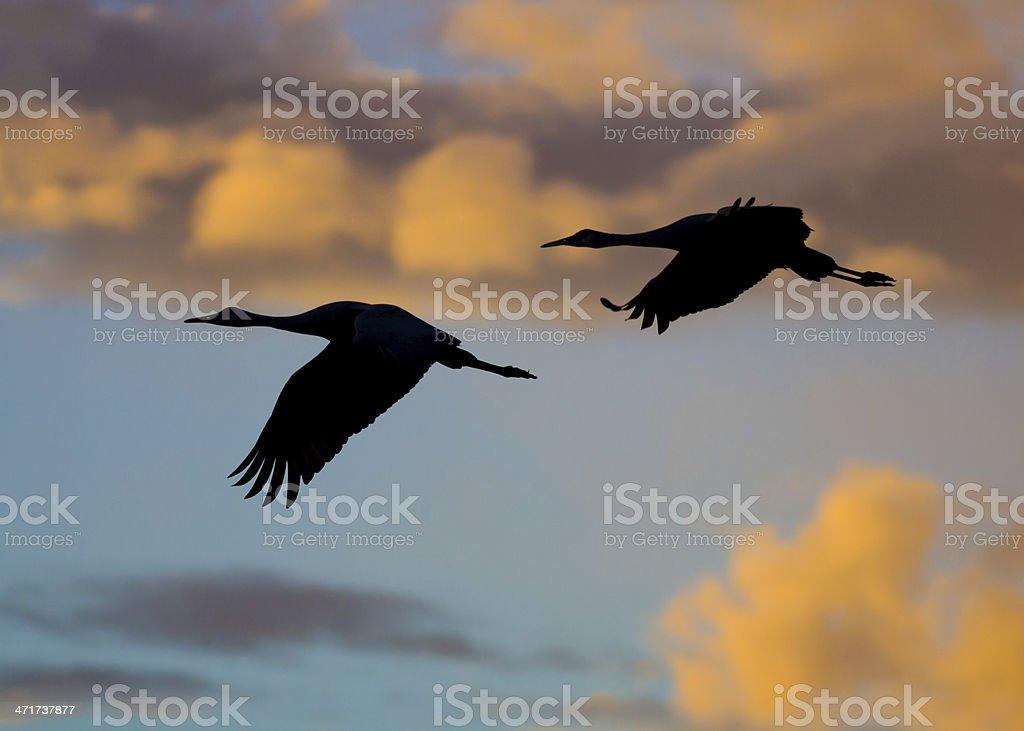 Cranes at Sunset royalty-free stock photo