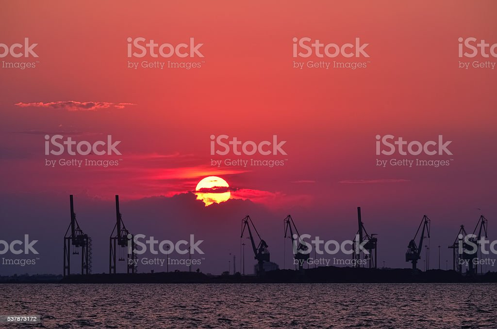 Cranes at sunset stock photo