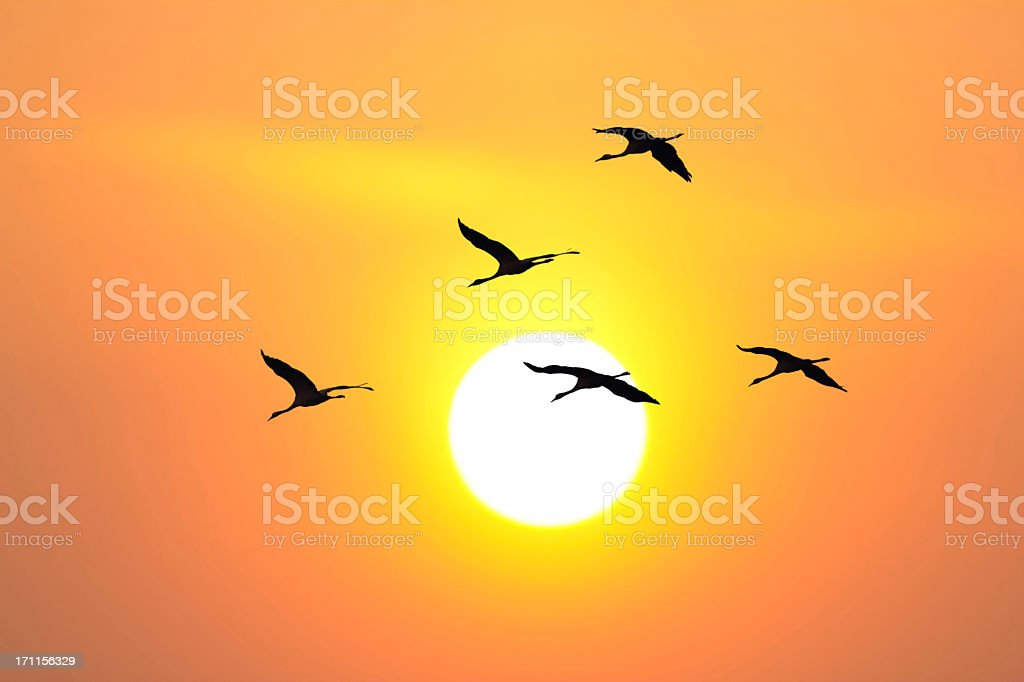 Cranes in a Sunset royalty-free stock photo