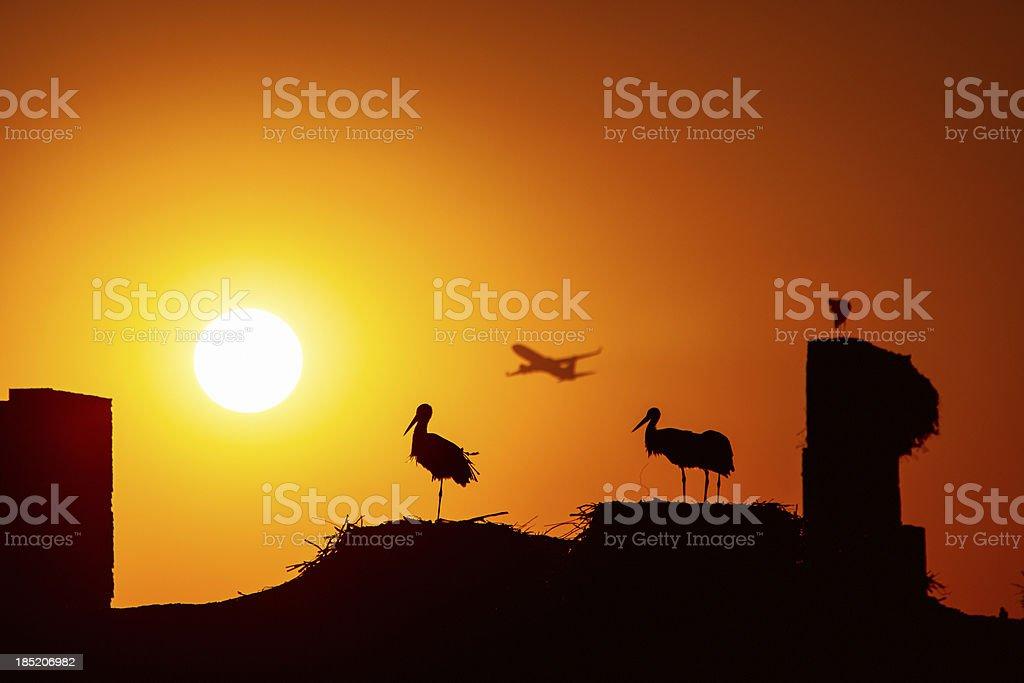 Cranes in Marrakech stock photo