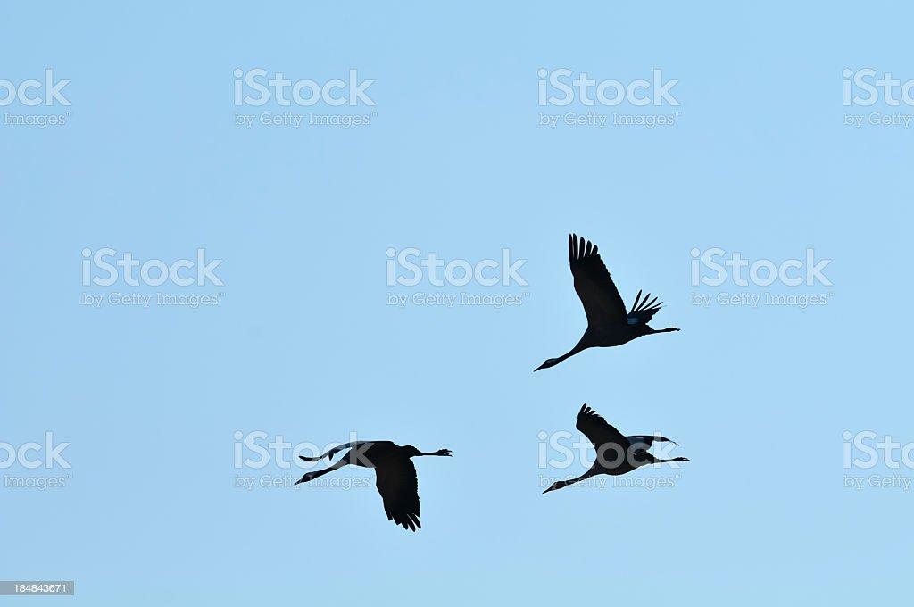 Cranes in the sky stock photo