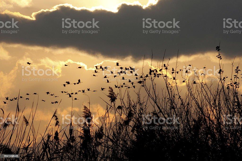 Cranes Migrating Through Hahula Valley stock photo