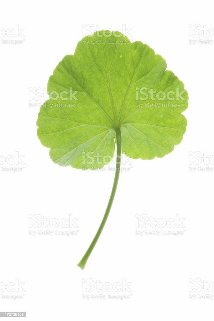 cranesbill leaf royalty-free stock photo