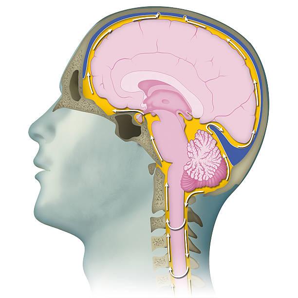 Craniosacral therapy – Foto