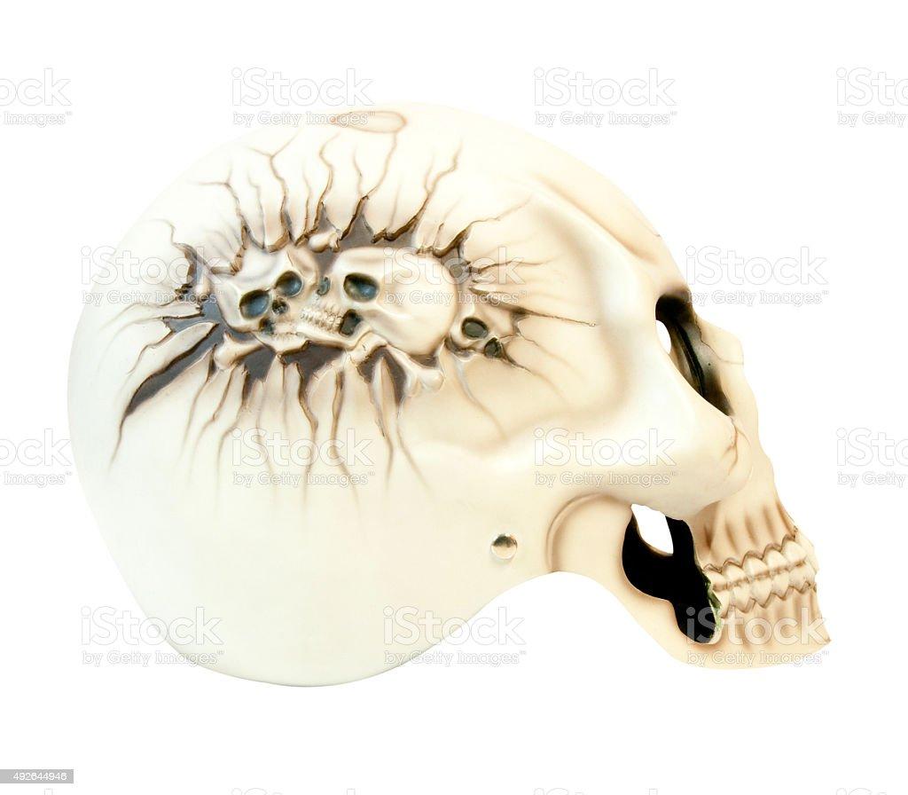 Cranium stock photo