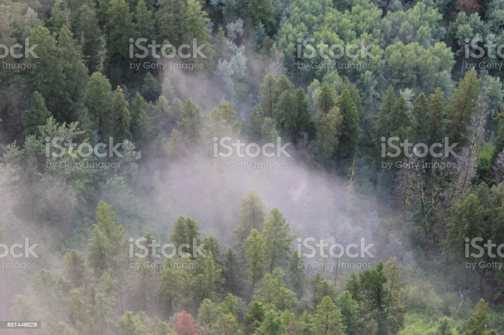 Crash site in fog and trees stock photo