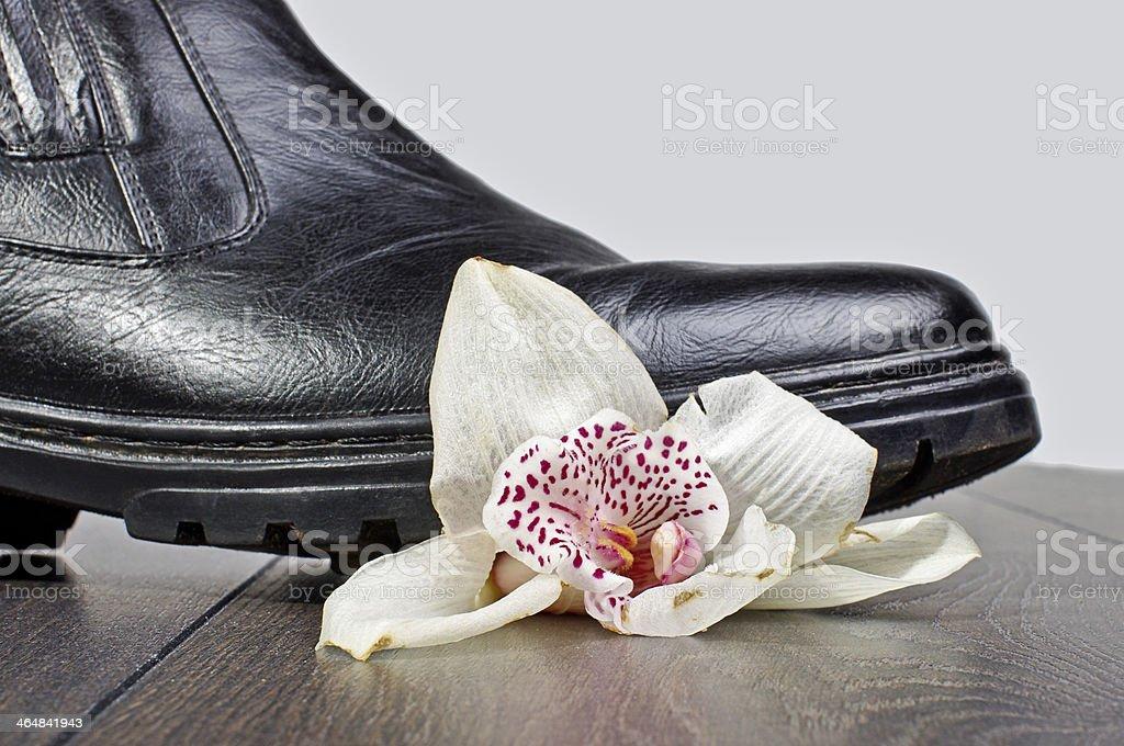 Crashed flower stock photo
