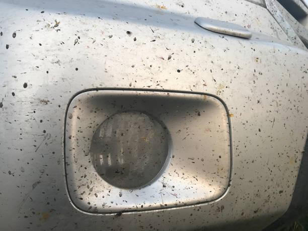 자동차 범퍼의 추락된 곤충 스톡 사진
