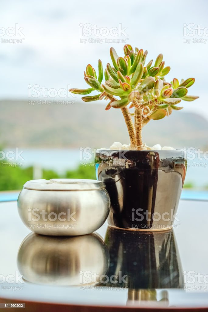 Crassula in the pot and ashtray on the table stock photo