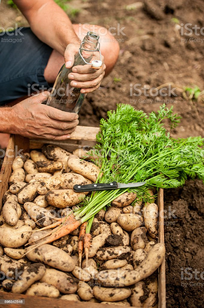 Crate Full of Home Grown Vegetable royalty-free stock photo