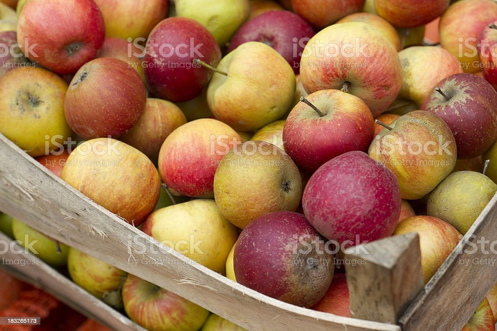 Crate of apples royalty-free stock photo