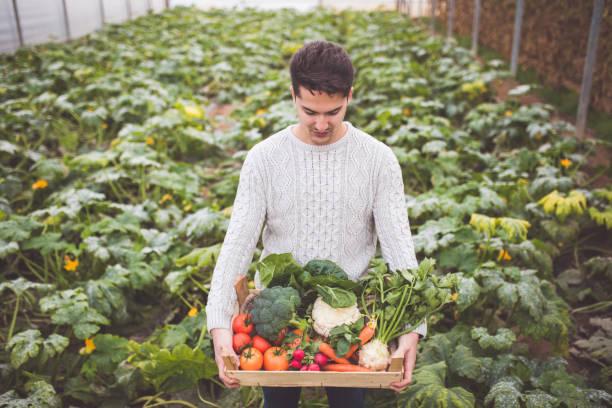 Crate Of Fresh Organic Veggies stock photo