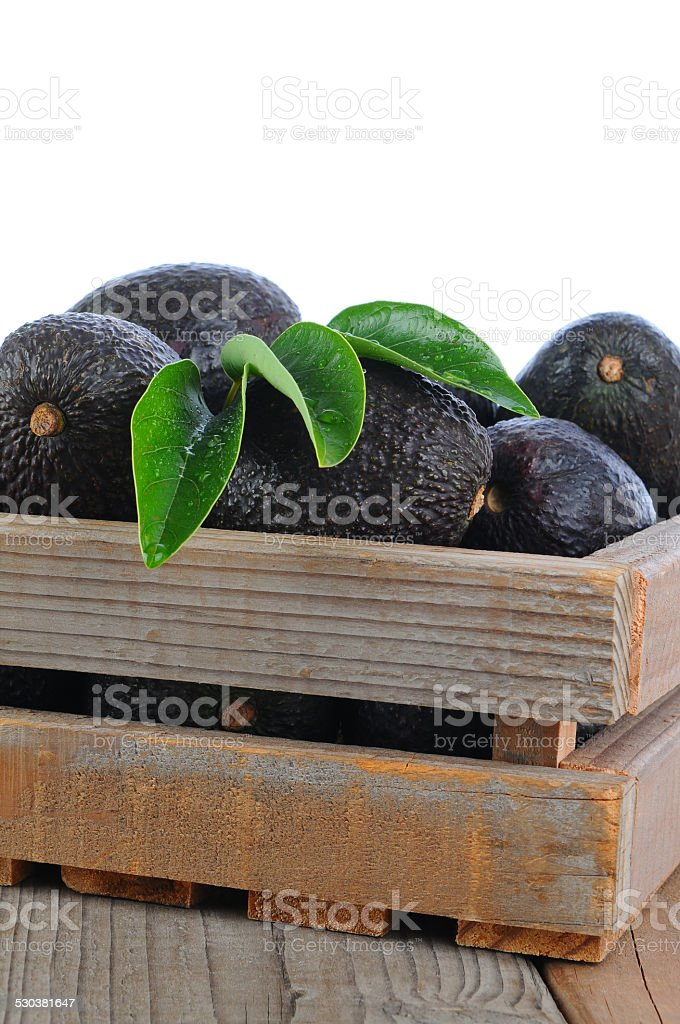 Crate of Hass Avocados stock photo
