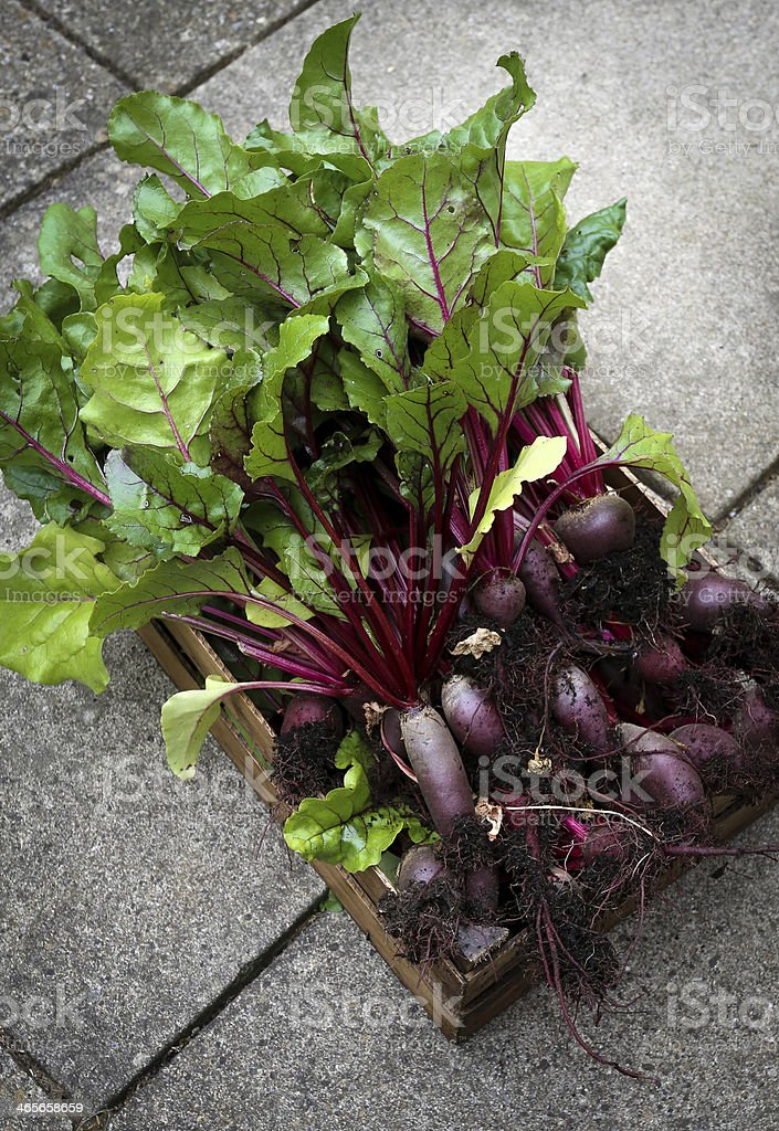 Crate Of Organic Grown Beetroot royalty-free stock photo