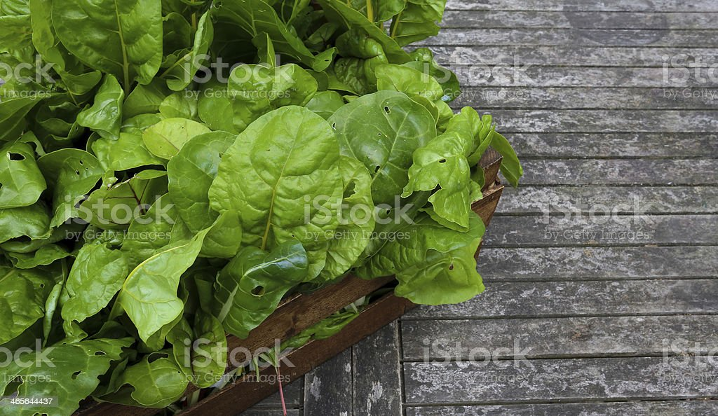 Crate Of Organic Grown Rainbow Chard royalty-free stock photo