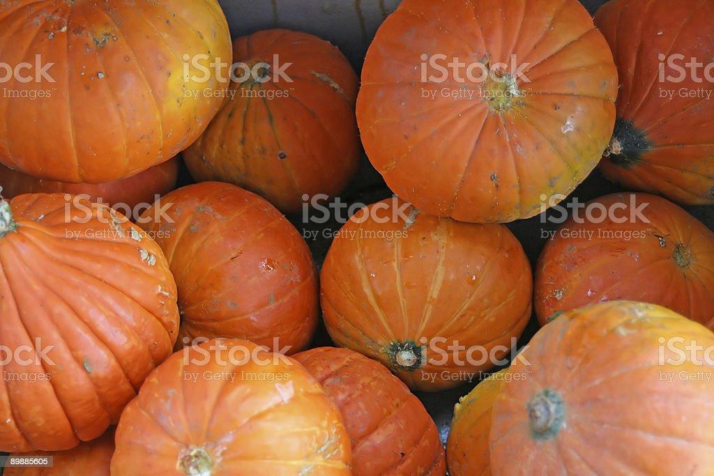 Jaula de Pumpkins foto de stock libre de derechos