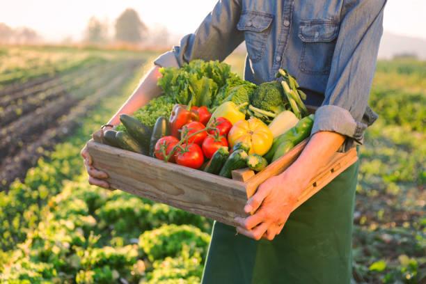 Kiste aus rohem Gemüse – Foto