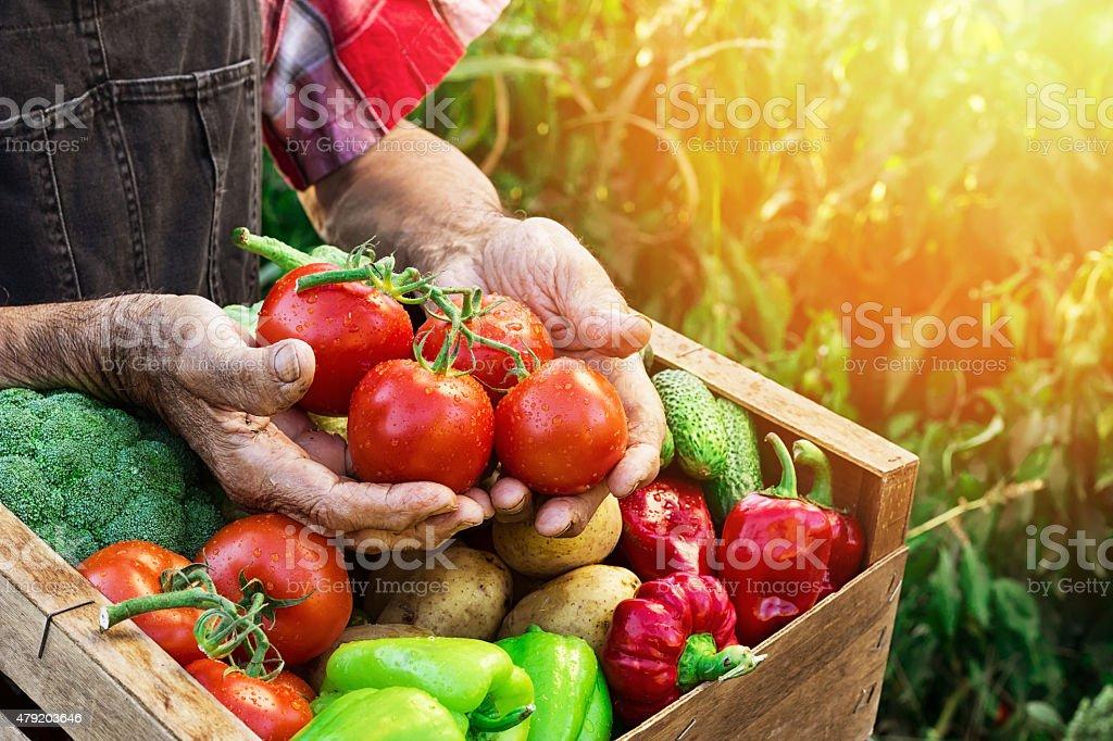 Holzkiste mit Gemüse – Foto