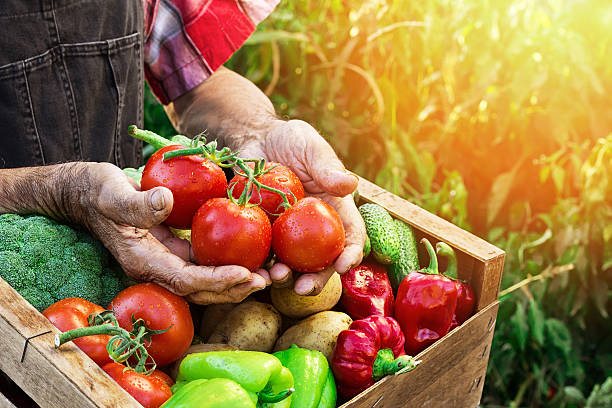 crate with vegetables - tomato field stock photos and pictures