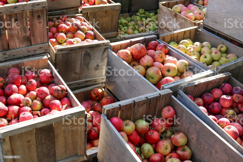 Crates of Apples stock photo