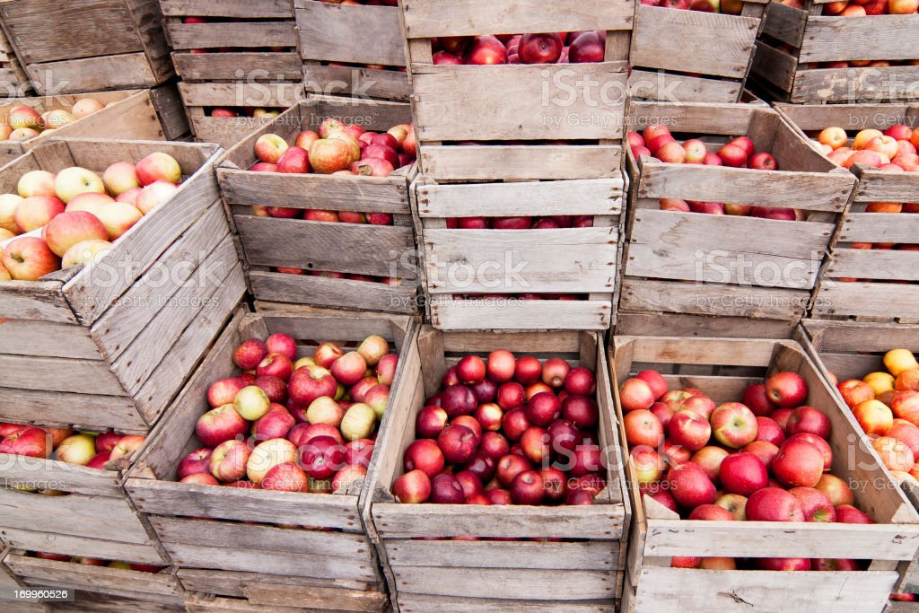 Crates of Apples royalty-free stock photo