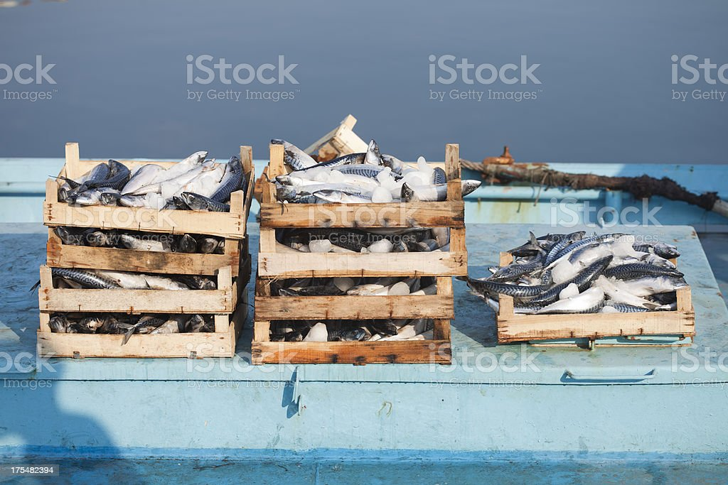 Crates of mackerel piled on blue surface stock photo