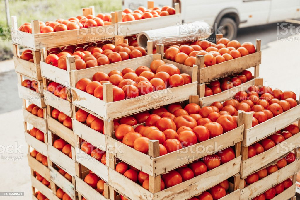Crates Of Tomato Packing Products For Export Stock Photo
