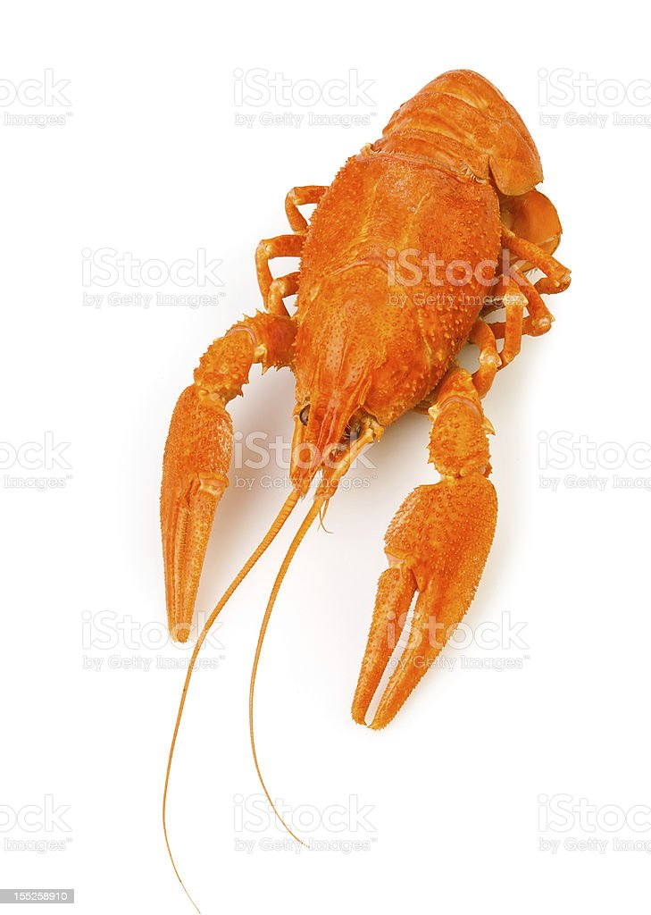 crawfish boiled one royalty-free stock photo