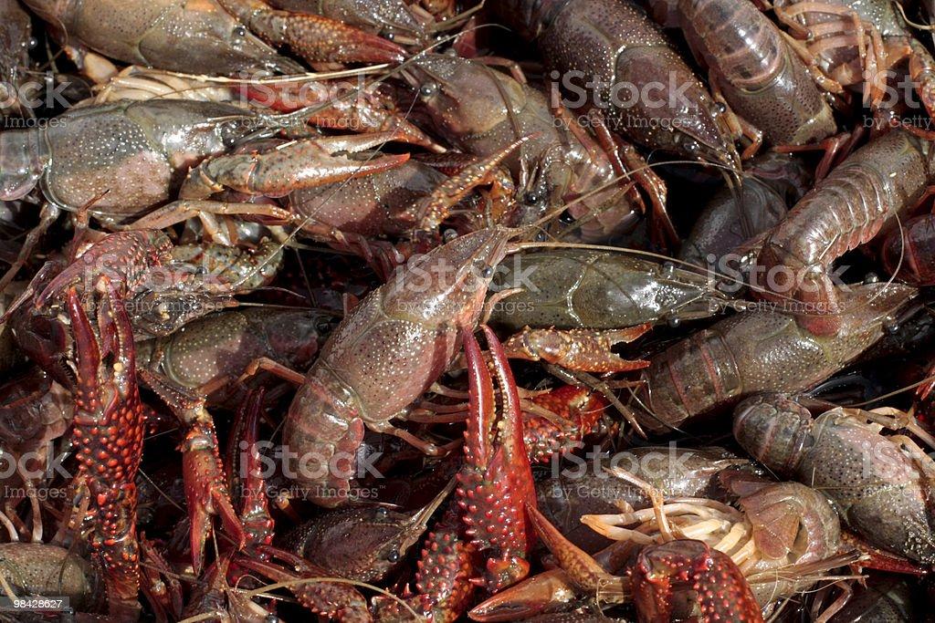 Crawfish dettaglio-media orizzontale foto stock royalty-free