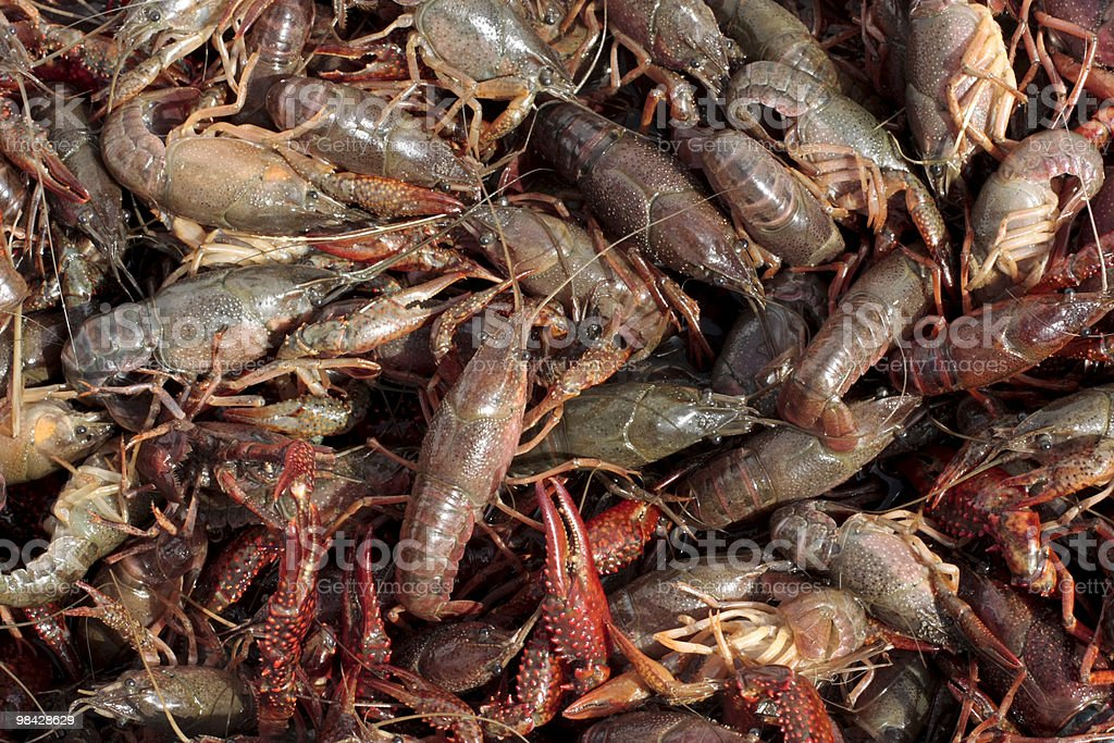 Crawfish detail-wide horizontal royalty-free stock photo