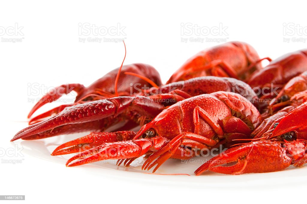 Crawfish royalty-free stock photo