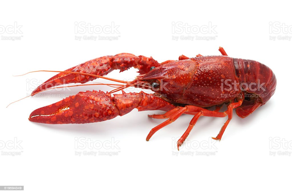 crawfish stock photo