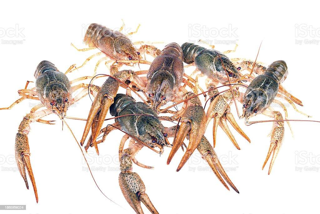 Crawfish Top View royalty-free stock photo