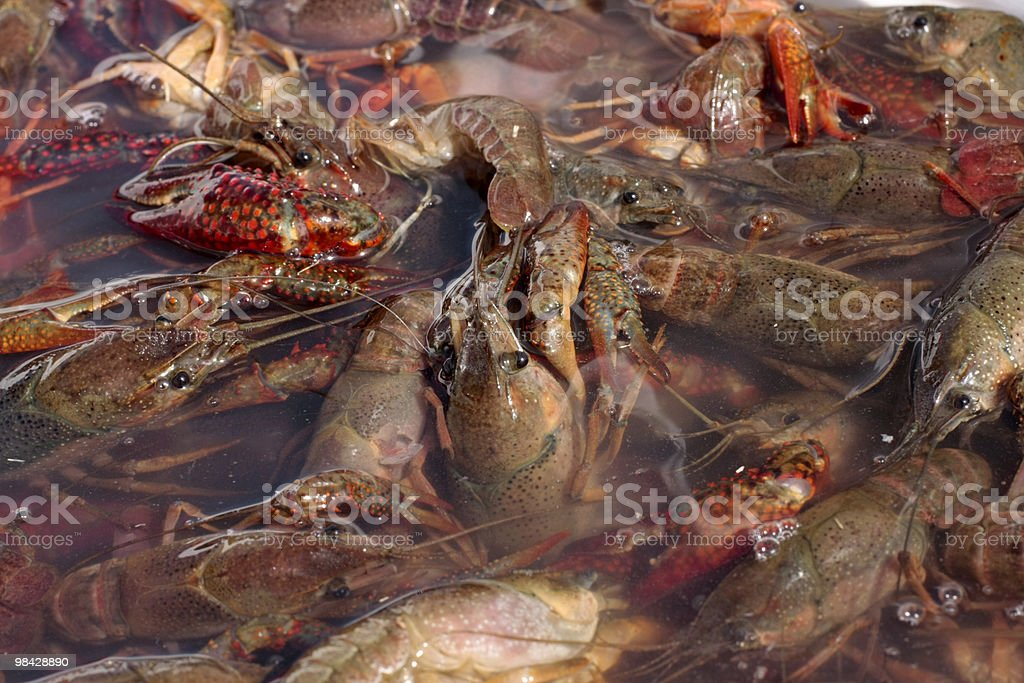 Crawfish water 1- horiz royalty-free stock photo