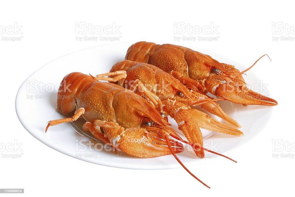 Crawfishes stock photo