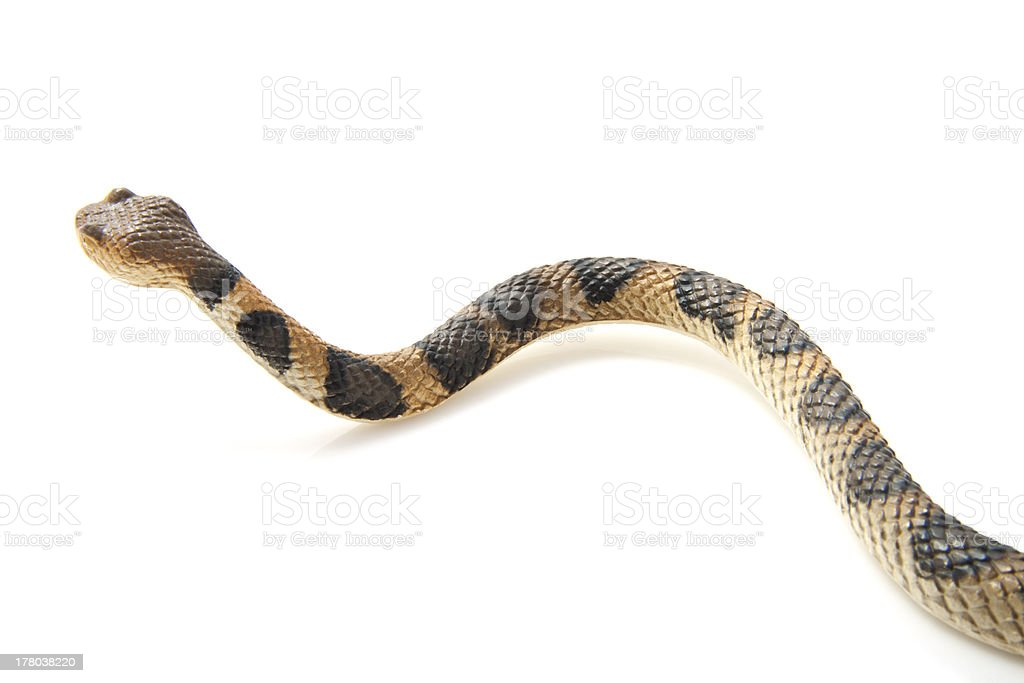 Crawling snake royalty-free stock photo