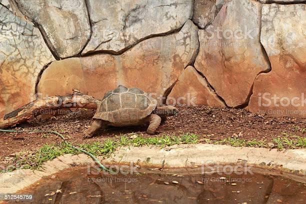 Crawling tortoise in the nature picture id512545759?b=1&k=6&m=512545759&s=612x612&h=ti6qwuvix tbbe62ursfyypv4uniselb ty0m9dzwke=
