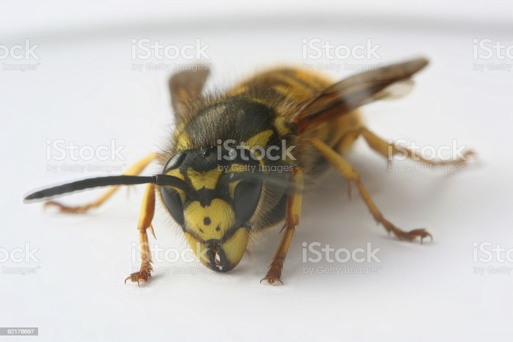 Crawling wasp stock photo